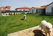 Zona de juegos hotel canino - piscina y arenero
