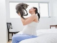 El embarazo, nuestro gato y la toxoplasmosis
