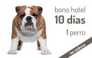 Bono 10 días Hotel Canino para 1 perro