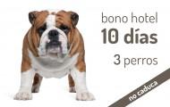 Bono 10 días Hotel Canino para 3 perros en el mismo box